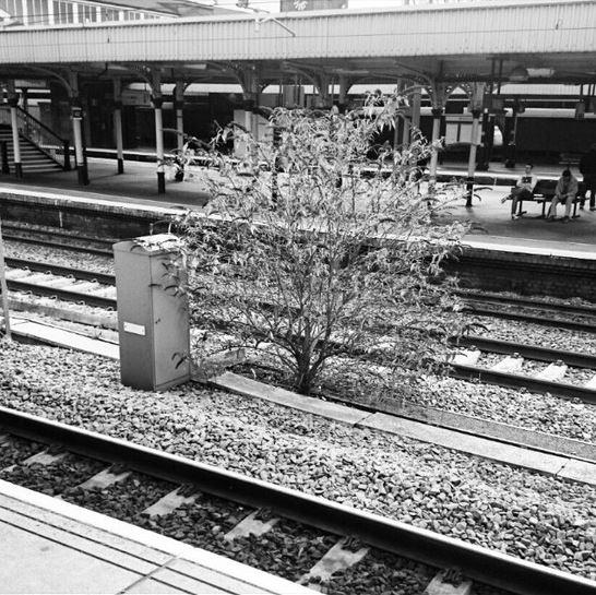 tree on tracks
