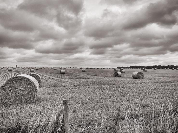 WiltshireFieldHay